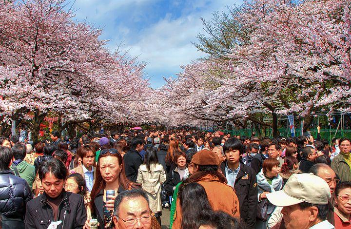 Folla al parco di Ueno
