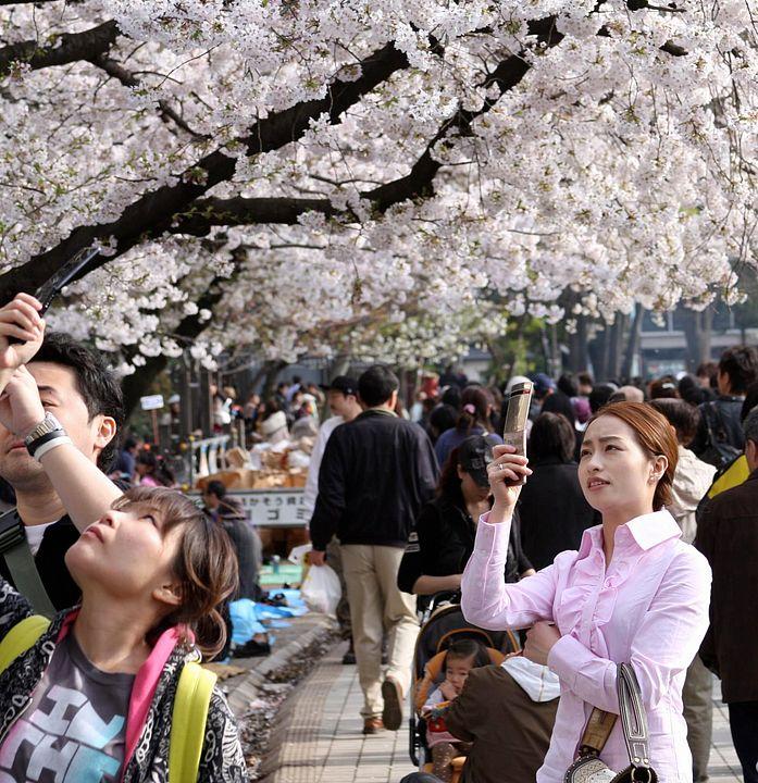 ragazza fotografa fiori di ciliegio