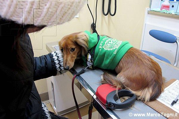 frankie-veterinario